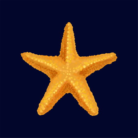 Starfish, sea star and shell vector Illustration isolated on a dark blue background.