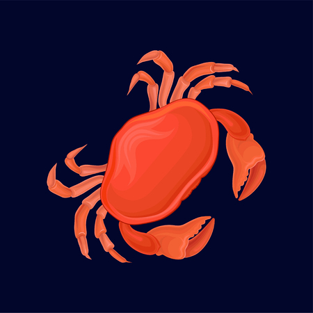 Red crab, sea creature vector Illustration isolated on a dark blue background.