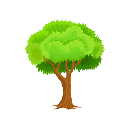 Season tree with green leaves vector Illustration on a white background