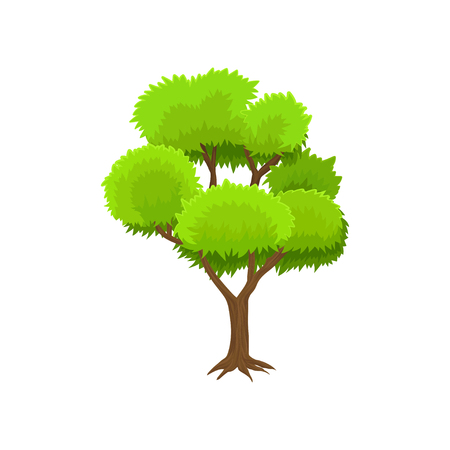 Spring season tree with green leaves vector Illustration on a white background