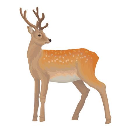 Herten wilde noordelijke bos dierlijke vectordieIllustratie op een witte achtergrond wordt geïsoleerd. Stock Illustratie