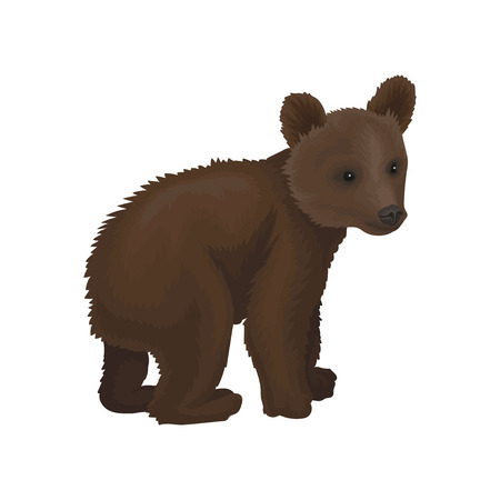 Little bear cub wild northern forest animal vector Illustration isolated on a white background.