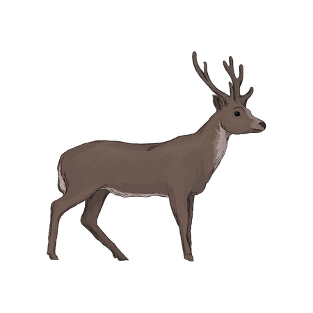 Elk wild northern forest animal vector Illustration isolated on a white background.