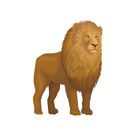 Lion wild african animal vector Illustration on a white background.