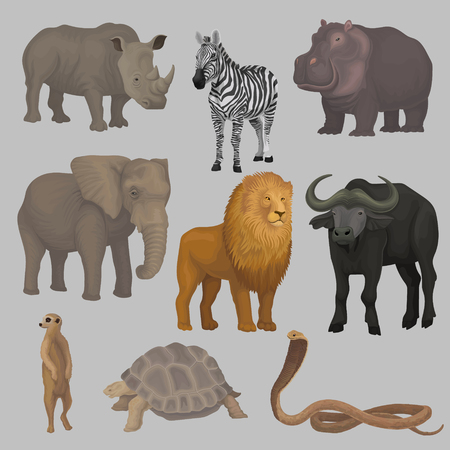 Wild african animals set, hippopotamus, elephant, giraffe, rhinoceros, turtle, buffalo, zebra, lion, snake vector Illustrations