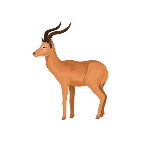 Antelope wild African animal vector illustration on a white background.