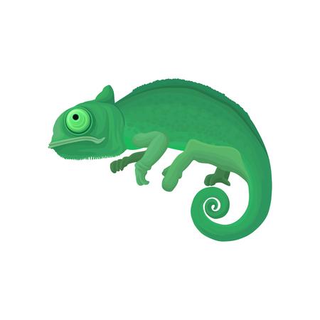 Chameleon wild African animal vector illustration on a white background. Illustration