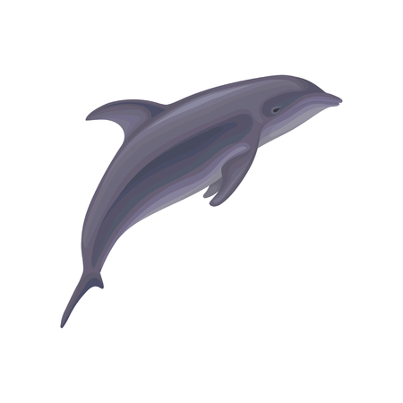 Dolphin jumping, marine mammal, inhabitant of sea and ocean vector Illustration isolated on a white background. Illustration