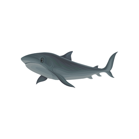 Shark marine mammal, inhabitant of sea and ocean vector Illustration isolated on a white background.