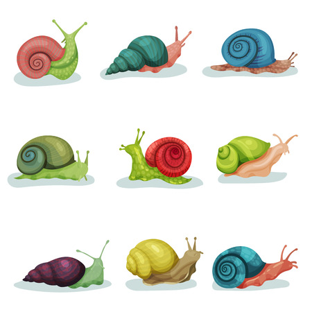 Collection of snails of different shell colours vector Illustrations isolated on a white background