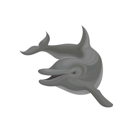 Dolphin marine mammal, inhabitant of sea and ocean vector Illustration on a white background