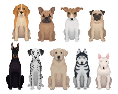 Colorful set of dogs of different breeds. Domestic animals. Home pets. Graphic design for poster of animal clinic, kennel club or zoo store. Detailed flat vector icons isolated on white background.