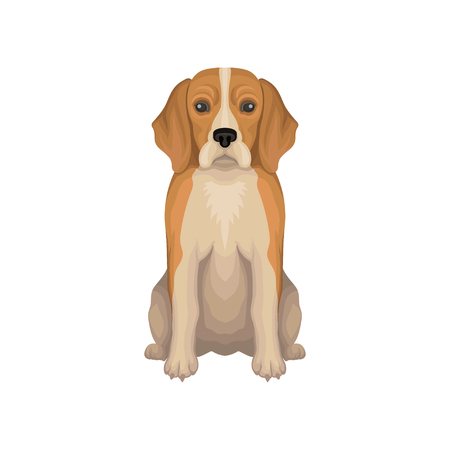 Colorful illustration of Beagle. Small breed of hunting dog with long ears, short hair and cute muzzle. Domestic animal. Human s best friend. Detailed flat vector icon isolated on white background. Illustration