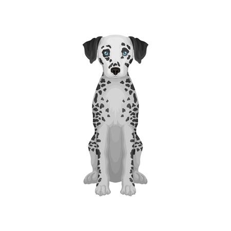 Adorable dalmatian dog with blue eyes and black round spots on body. Detailed flat vector design for promo poster flyer of pet shop Illustration