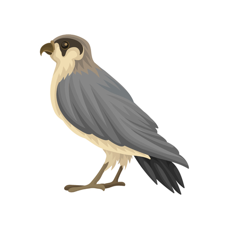 Detailed flat vector icon of Egyptian falcon. Predatory bird with long gray-black pointed wings and notched beak Zdjęcie Seryjne - 101963601