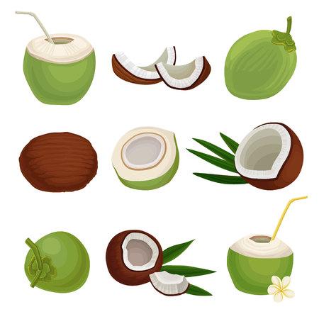 신선한 코코넛의 평면 벡터 집합입니다. 이국적인 칵테일. 자연적이고 건강한 음식. 열대 과일. 제품 포장 또는 포스터 요소