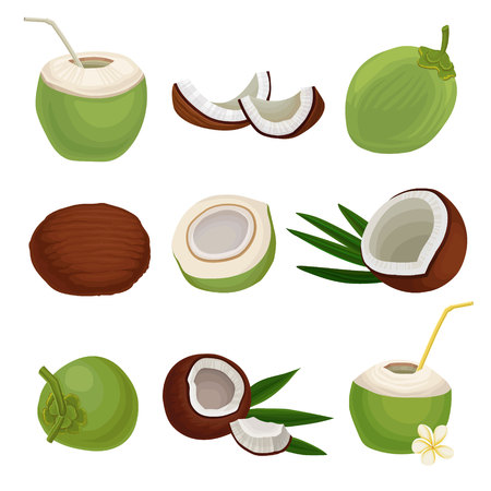 Conjunto de vector plano de cocos frescos. Cóctel exótico. Alimentos naturales y saludables. Fruta tropical. Elementos para el envasado de productos o carteles.