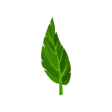 Small green leaf of tropical plant. Nature and botanical theme. Decorative flat vector element for poster or flyer