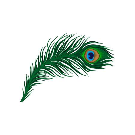Długie, szmaragdowozielone pióro pawia. Upierzenie pięknego dzikiego ptactwa. Szczegółowy płaski element wektora do plakatu, książki lub druku Ilustracje wektorowe