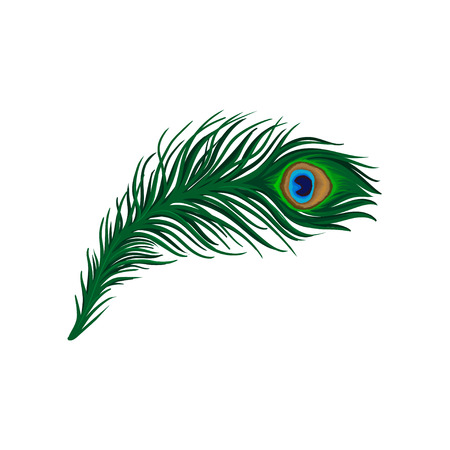 Long emerald-green feather of peacock. Plumage of beautiful wild bird. Detailed flat vector element for poster, book or print Illustration