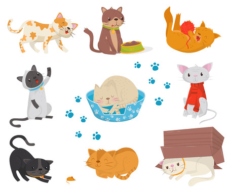 Flat vector set with funny cats. Cartoon characters of cute domestic animals. Elements for postcard, promo poster or banner of pet store