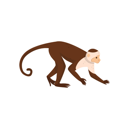 Flat vector icon of brown capuchin, side view. Small monkey with long tail. Wild animal from rainforest. Wildlife or fauna theme