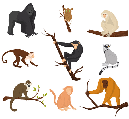 Flat vector set of 9 species of monkeys. Wild animals. Elements for promo poster or banner of zoo park. Wildlife theme Illustration