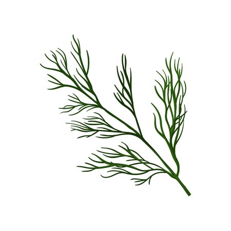 Branch of fresh green dill. Ingredient for flavoring dish. Herbs and spices theme. Flat vector design