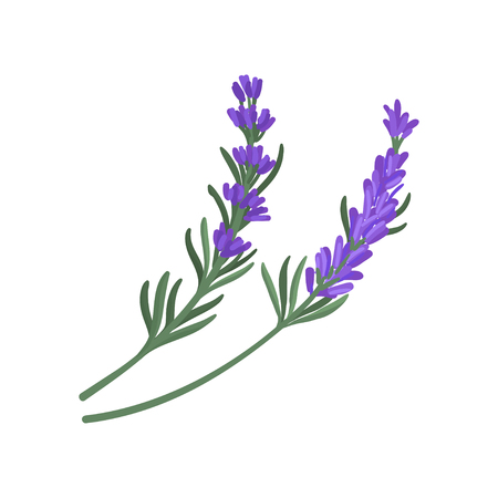 Flat vector icon of two small sprigs of green rosemary with narrow leaves and purple flowers. Culinary herb. Aromatic seasoning for dishes