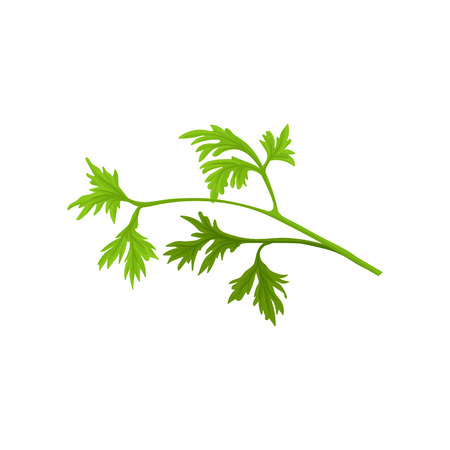 Small branch of fresh parsley with bright green leaves. Aromatic plant. Flat vector icon of culinary herb. Natural condiment