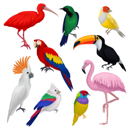 Detailed vector set of various exotic birds. Wild creatures with colorful feathers. Fauna and wildlife theme Illustration