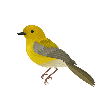 Detailed vector icon of yellow warbler. Small song bird with long tail and bright plumage. Ornithology or wildlife theme Stock Photo