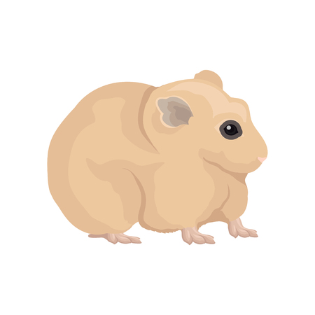 Flat vector of domestic hamster. Home rodent with thick beige coat, small ears and shiny eye. Element for advertising poster of pet store