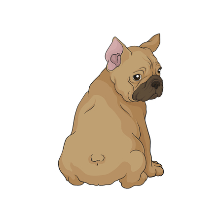 Cute boston terrier sitting and looking back. Puppy with wrinkled muzzle and short brown coat. Small domestic dog. Cartoon vector icon