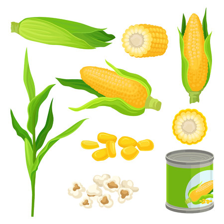 Sweet corn set, fresh corncobs, popcorn, canned corn vector Illustrations on a white background