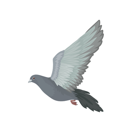 Grey urban pigeon flying, side view vector Illustrations on a white background