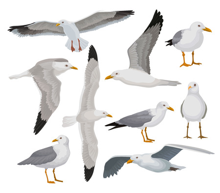 Beautiful seagull set, gray and white sea bird in different poses vector Illustrations on a white background Vettoriali