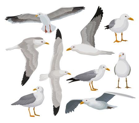 Mooie zeemeeuw set, grijze en witte zeevogel in verschillende poses vector illustraties op een witte achtergrond