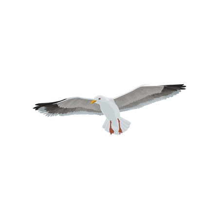 Seagull soaring in the sky, gray and white sea bird vector Illustration on a white background Illustration