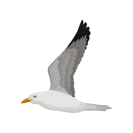 Flying seagull, gray and white sea bird, side view vector Illustration on a white background