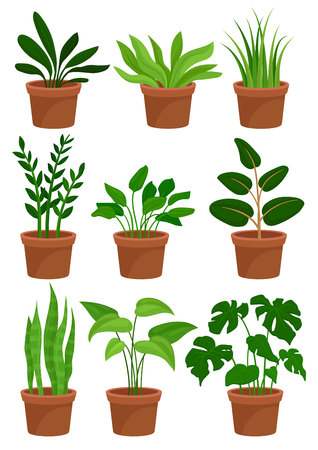 Home decorative plants set, houseplants for interior design vector Illustrations on a white background
