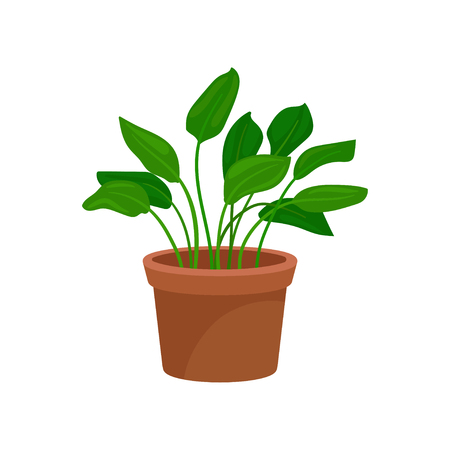 Leafy home decorative plant, houseplant for interior design vector Illustration on a white background