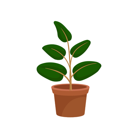 Green decorative houseplant for interior design vector Illustration on a white background