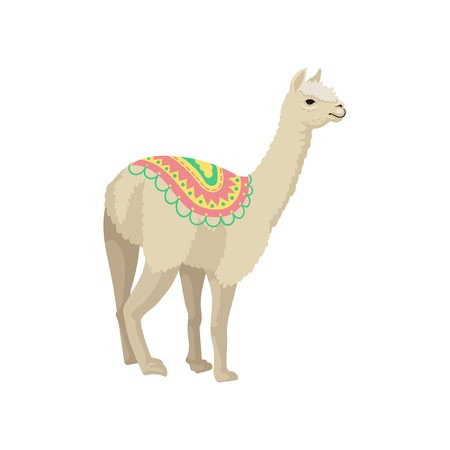 White llama alpaca animal wearing ornamented poncho vector Illustration on a white background