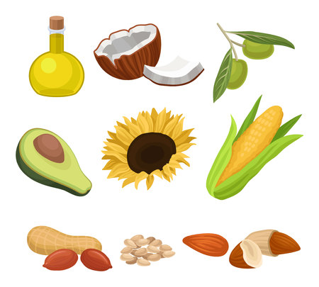 Source of edible oil set, coconut, avocado, sunflower, corncob, peanut, almond, sesame, olive vector Illustrations isolated on a white background Ilustrace