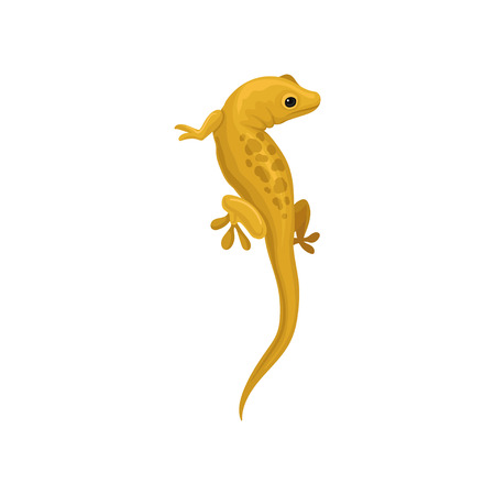 Lizard amphibian animal vector Illustration isolated on a white background.