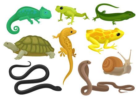 Zestaw gadów i płazów, kameleon, żaba, żółw, jaszczurka, gekon, triton wektor ilustracja na białym tle.