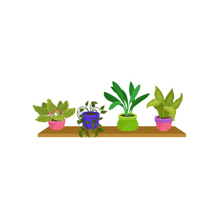 Set of 4 houseplants in colorful ceramic pots. Cute green decorative plants on wooden shelf. Nature element for home interior. Cartoon style icons. Flat vector design isolated on white background. 向量圖像