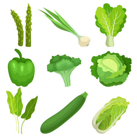 Set of fresh green garden vegetables. Ingredients for vegetarian salad. Natural and healthy food. Organic farm products. Colorful vector illustrations in flat style isolated on white background.