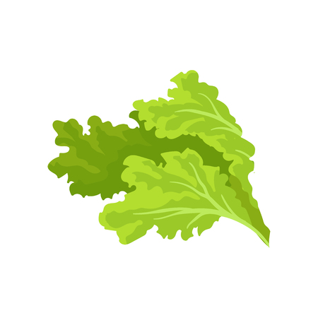 Bright green lettuce leaves. Fresh and healthy vegetable. Vegetarian nutrition. Flat vector for advertising poster of grocery store Imagens